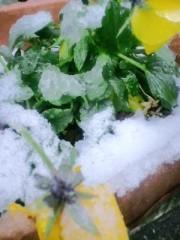 笠松江己子 公式ブログ/雪。 画像1