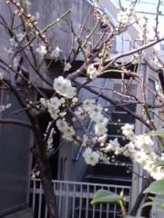 笠松江己子 公式ブログ/朗らかに、美しく。 画像1
