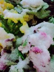 笠松江己子 公式ブログ/雪を粧う冬景色。 画像2