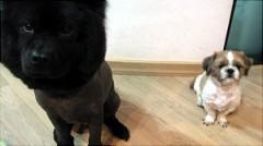 天上智喜 公式ブログ/社長は愛犬家です。 画像3