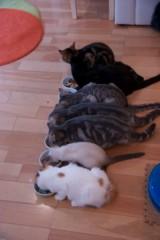 にゃんこ 公式ブログ/猫欠乏症 画像3