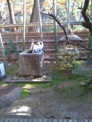 にゃんこ 公式ブログ/今日も、京も猫満開です。 画像3