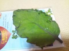 にゃんこ 公式ブログ/『幸せの葉っぱ』 画像2