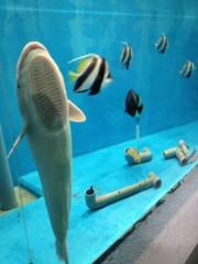 にゃんこ 公式ブログ/ネコセンターと水族館 画像3