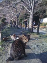 にゃんこ 公式ブログ/今日も、京も猫満開です。 画像1