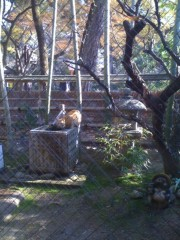 にゃんこ 公式ブログ/今日も、京も猫満開です。 画像2