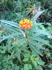にゃんこ 公式ブログ/名も知らない素敵なお花や植物 画像1