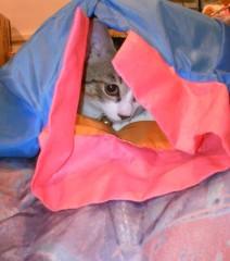 にゃんこ 公式ブログ/良いnyankoは、布団の中へ 画像1