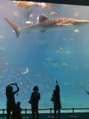 にゃんこ 公式ブログ/ジンベイザメ大きいにゃ 画像1