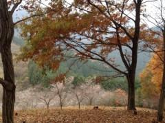 にゃんこ 公式ブログ/紅葉と冬桜 画像3