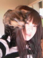 にゃんこ 公式ブログ/あったか猫マフラー 画像1