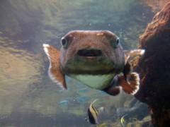にゃんこ 公式ブログ/ジンベイザメ大きいにゃ 画像2