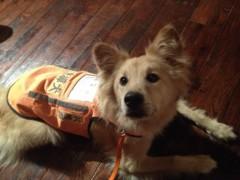 にゃんこ 公式ブログ/聴導犬欲しいにゃ。 画像2