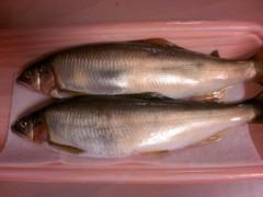 にゃんこ 公式ブログ/魚とnyankoと枝豆(と)ジョニー 画像2