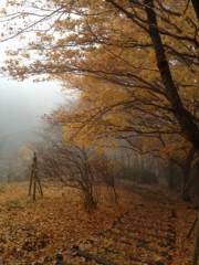 にゃんこ 公式ブログ/紅葉と冬桜 画像2