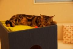 にゃんこ 公式ブログ/猫欠乏症 画像1