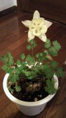 石井智也 公式ブログ/花に詳しい方教えて! 画像1