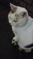 石井智也 公式ブログ/犬派?猫派? 画像2