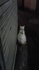 石井智也 公式ブログ/犬派?猫派? 画像1