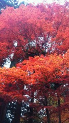 石井智也 公式ブログ/日帰り日光の旅 画像3