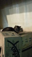 石井智也 公式ブログ/夜猫 画像1