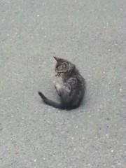 石井智也 公式ブログ/子猫 画像1