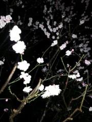 石井智也 公式ブログ/幻想的 画像1