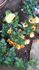 石井智也 公式ブログ/花植える 画像2