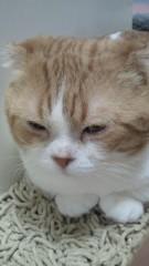 石井智也 公式ブログ/花粉症の弊害 画像3