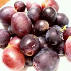 石井智也 公式ブログ/ブドウ収穫 画像1