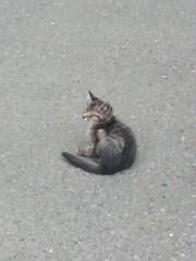 石井智也 公式ブログ/子猫 画像2