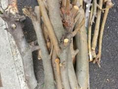 石井智也 公式ブログ/伐採 画像2