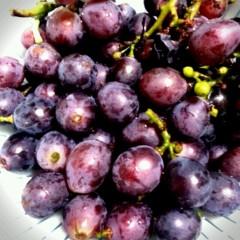 石井智也 公式ブログ/収穫と一人ランチ 画像1