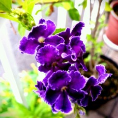 石井智也 公式ブログ/紫 画像2