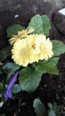石井智也 公式ブログ/花植える 画像1