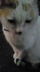 石井智也 公式ブログ/犬派?猫派? 画像3