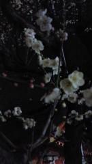 石井智也 公式ブログ/春よこい 画像1