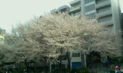 石井智也 公式ブログ/花見から夜桜 画像1