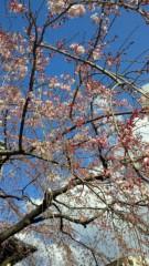 石井智也 公式ブログ/開花 画像1