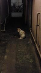 石井智也 公式ブログ/路地猫 画像1