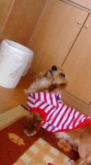 小湊あや 公式ブログ/☆:)愛犬 画像1
