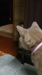 岩見理奈 公式ブログ/★家猫レノ★ 画像2
