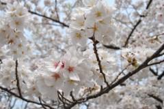 keiko(Vanilla Mood) 公式ブログ/お花見☆photo session 画像2