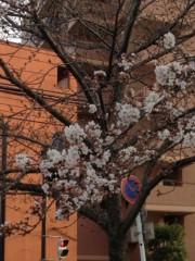 keiko(Vanilla Mood) 公式ブログ/桜と黒バナナ 画像1