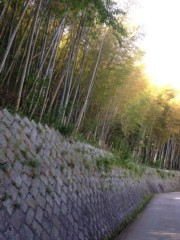 keiko(Vanilla Mood) 公式ブログ/竹♪ 画像3