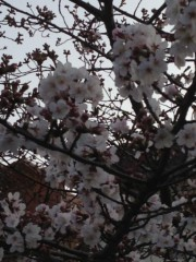 keiko(Vanilla Mood) 公式ブログ/桜と黒バナナ 画像2