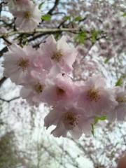 keiko(Vanilla Mood) 公式ブログ/おはようございます 画像2
