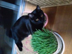 笹川亜矢奈 公式ブログ/猫にネコ草 画像1
