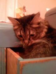 ケイティ・ペリー 公式ブログ/[ケイティより♪] Kitty Purry 画像1