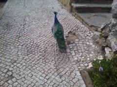 ケイティ・ペリー 公式ブログ/[ケイティより♪] peacock 画像1